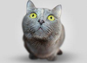 cat-pic 2